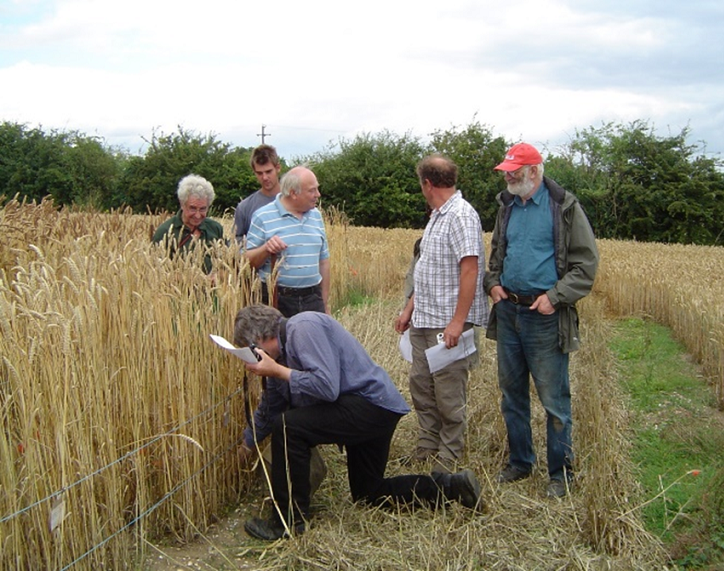 Thatchers evaluating GRU demonstration plots of UK Heritage wheats.